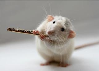rato-flautista